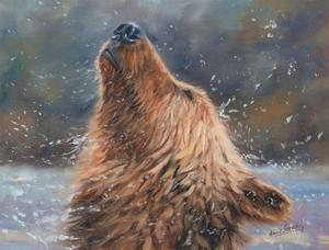 Brown Grizzly Bear by David Stribbling