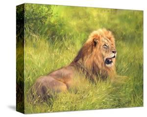 Lion on Grass by David Stribbling