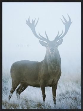 Epic by David Tipling