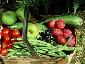 Garden Fruits by David Tipling