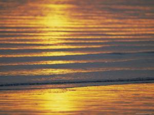 Golden Light on Ripples on the Sea Shore by David Tipling