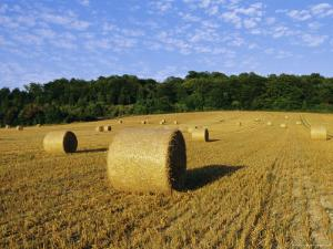 Hay Bales in a Field in Late Summer, Kent, England, UK, Europe by David Tipling