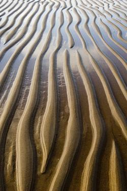 Patterns on wet sandy beach at low tide, Northumberland, England, july by David Tipling