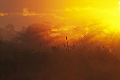 View of swamp habitat at sunrise, Everglades, Florida, USA by David Tipling