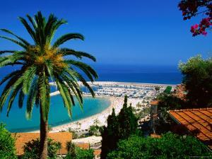 Beach and Town from Hill with Palm Tree in Foreground, Menton, Provence-Alpes-Cote d'Azur, France by David Tomlinson