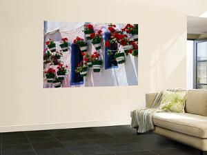 Green and White Plantpots Containing Red Geraniums by David Tomlinson