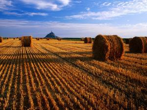 Mont St Michel across Field of Stubble by David Tomlinson