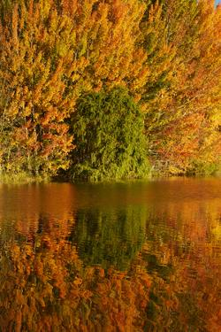 Autumn reflections in Kellands Pond, South Canterbury, South Island, New Zealand by David Wall
