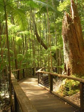 Boardwalk by Wanggoolba Creek, Fraser Island, Queensland, Australia by David Wall