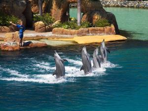 Dolphins, Sea World, Gold Coast, Queensland, Australia by David Wall