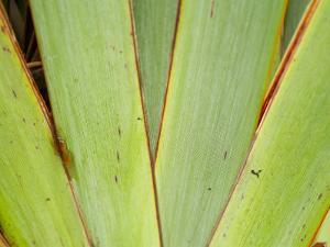 Flax Detail, West Coast, South Island, New Zealand by David Wall