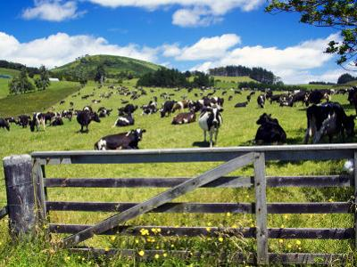Gate and Dairy Farm near Kaikohe, Northland, New Zealand by David Wall
