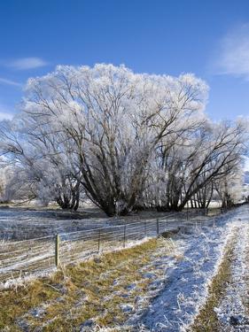 Hoar Frost, Oturehua, South Island, New Zealand by David Wall