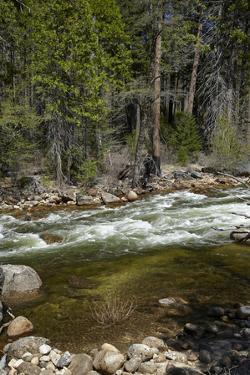Merced River, Yosemite Valley, Yosemite National Park, California, USA by David Wall
