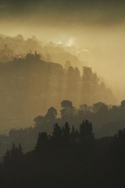 Mist and low sunlight over Dunedin Botanic Garden and Leith Valley, Dunedin, Otago by David Wall