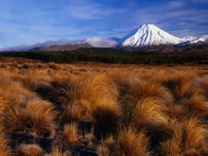 Mt. Ngauruhoe Through Grassy Landscape, Tongariro National Park, Manawatu-Wanganui, New Zealand by David Wall