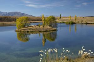 New Zealand, South Island, Mackenzie Country, Loch Cameron in Autumn by David Wall