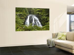 Owharoa Falls, Karangahake Gorge, Waikato, North Island, New Zealand by David Wall