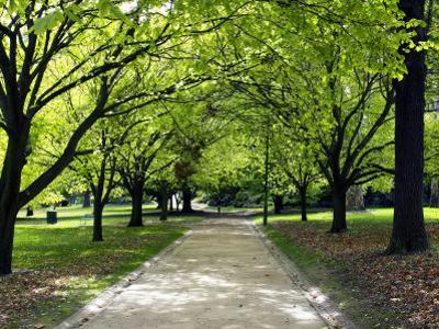 Pathway and Trees, Kings Domain, Melbourne, Victoria, Australia by David Wall