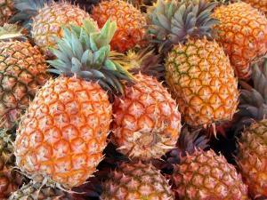 Pineapples, Sunshine Coast, Queensland, Australia by David Wall