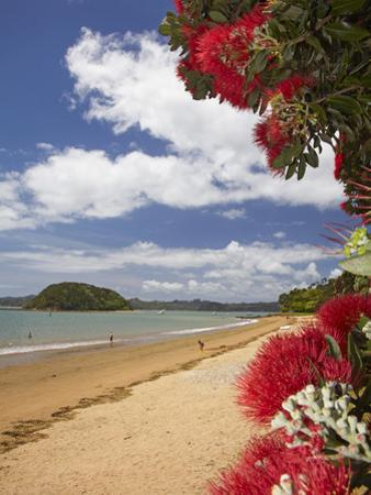 Pohutukawa Tree and Beach, Paihia, Bay of Islands, Northland, North Island, New Zealand by David Wall
