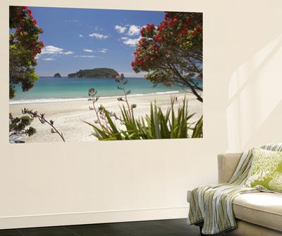Pohutukawa Tree in Bloom and Hahei, Coromandel Peninsula, North Island, New Zealand by David Wall