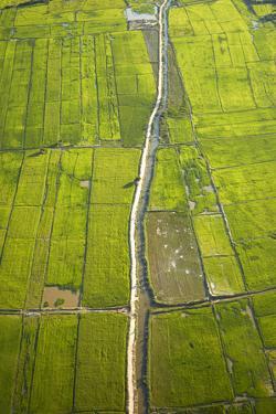 Rice Fields Near Siem Reap, Cambodia by David Wall