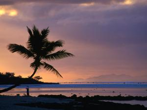 Silhouette of a Palm Tree and a Person Exercising on the Beach at Dawn, Coral Coast, Fiji by David Wall