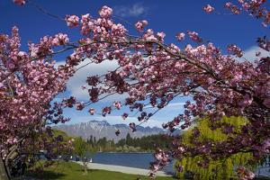 Spring Blossom, Lake Wakatipu and the Remarkables, Queenstown, Otago, South Island, New Zealand by David Wall