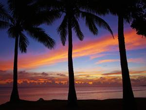 Sunset and Palm Trees, Coral Coast, Viti Levu, Fiji, South Pacific by David Wall