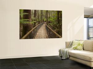 Tall Trees Walk, Mount Field National Park, Tasmania, Australia by David Wall