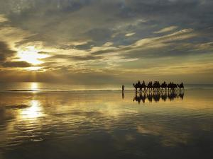 Tourist Camel Train on Cable Beach at Sunset, Broome, Kimberley Region, Western Australia by David Wall