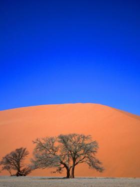 Tree and Sand Dune, Namib Desert Park, Namibia by David Wall