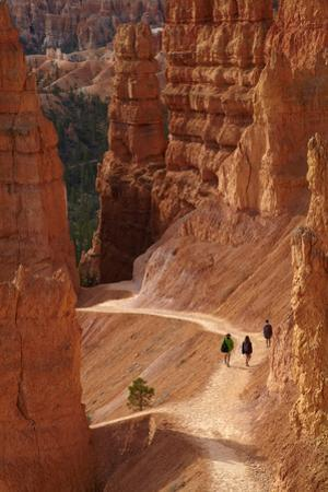 Utah, Bryce Canyon National Park, Hikers on Navajo Loop Trail Through Hoodoos by David Wall