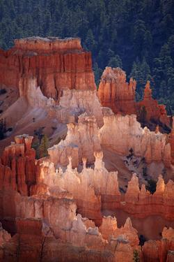 Utah, Bryce Canyon National Park, Hoodoos in Bryce Amphitheater by David Wall