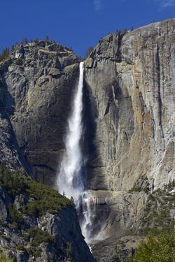 Yosemite Falls, Yosemite Valley, Yosemite NP, California, USA by David Wall