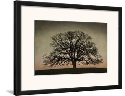 Majestic Oak by David Winston