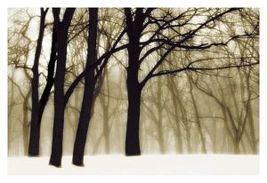 Past Dreams by David Winston