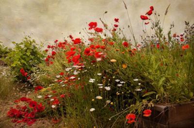 Poppy Garden by David Winston
