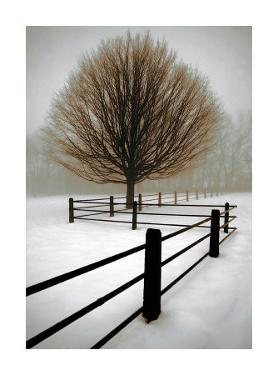 Solitude by David Winston