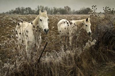 White Horses by David Winston