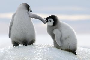 Penguins by David Yarrow Photography