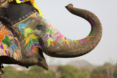 Decorated Elephant at the Elephant Festival in Jaipur by davidevison