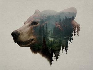 Pacific Northwest Black Bear by Davies Babies