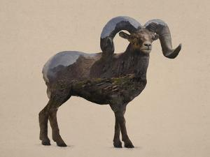 Rocky Mountain Bighorn by Davies Babies