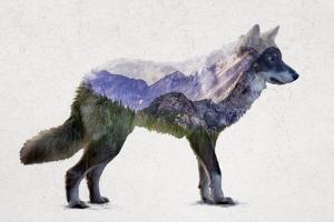 Rocky Mountain Grey Wolf by Davies Babies