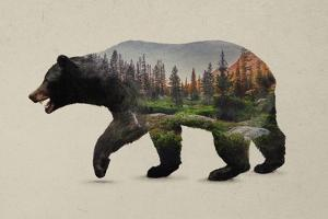 The North American Black Bear by Davies Babies