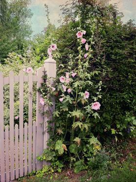 Gerberoy Gate by Dawne Polis