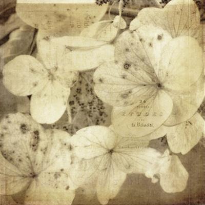 Hydrangeas 1