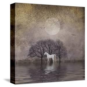 White Horse in Pond by Dawne Polis